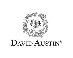 Кустовые розы (шрабы) David Austin (Дэвид Остин), Англия