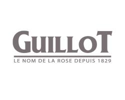 Кустовые розы (шрабы) Guillot (Гийо), Франция