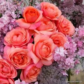 Coral Lions-Rose (Корал Лайонс Роуз), Kordes